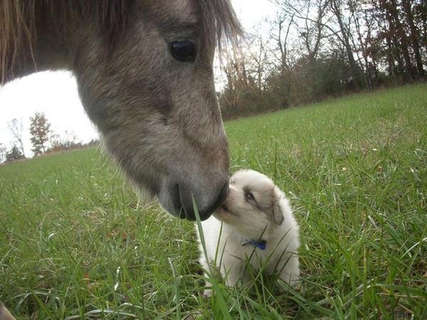子犬のキス 5