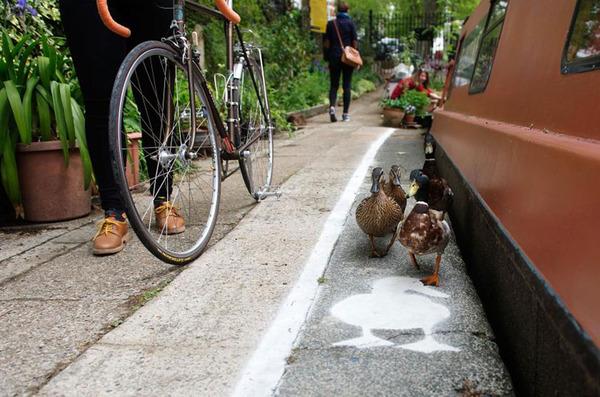 アヒル専用道路 ダックレーン duck lanes 2