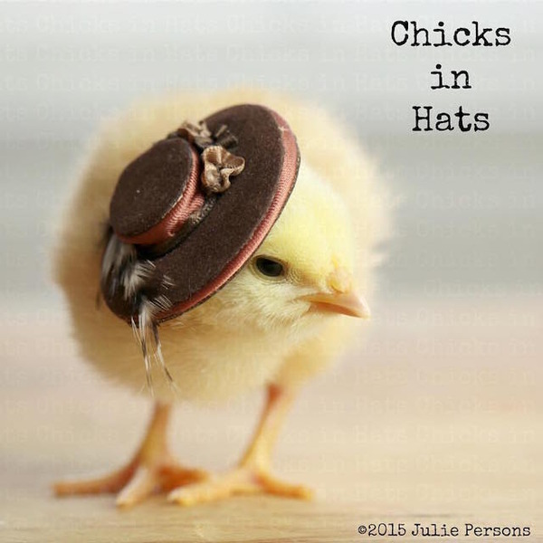 お洒落にきめるぜ!帽子を被ったヒヨコの画像 (9)