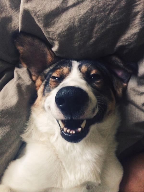 愛嬌たっぷりな笑顔を振りまくわんこ達!【犬画像】 (12)