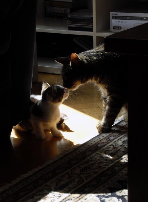 猫のバレンタインデー!【猫ラブラブ画像】 (48)