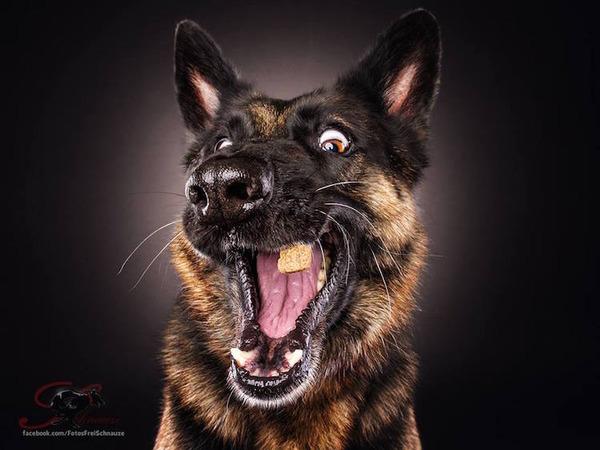 ハングリー精神!犬が獲物を食らう瞬間の静止画像がヤバイ (6)