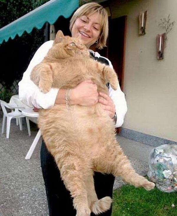 とても大きい猫の画像 34