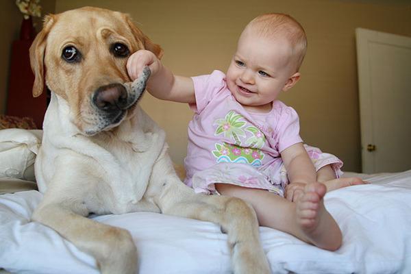 ペットは大切な家族!犬や猫と人間の子供の画像 (26)