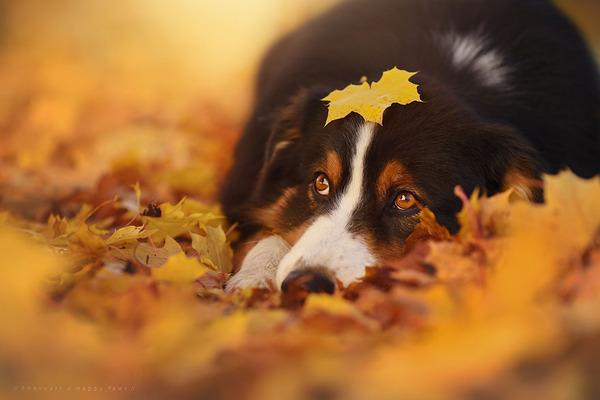 秋が来た!紅葉と遊ぶ犬画像 (2)