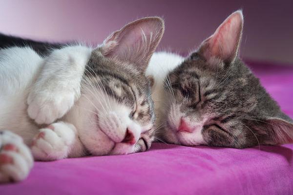猫のバレンタインデー!【猫ラブラブ画像】 (12)