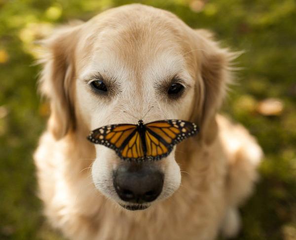 蝶と犬 1
