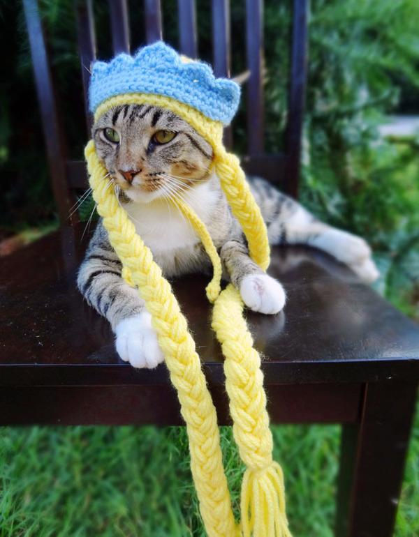 かわいさアップ?猫にぴったりなペット用ニット帽! (6)