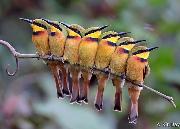 小鳥が温まる為に皆で寄り添っている可愛い画像 (25)