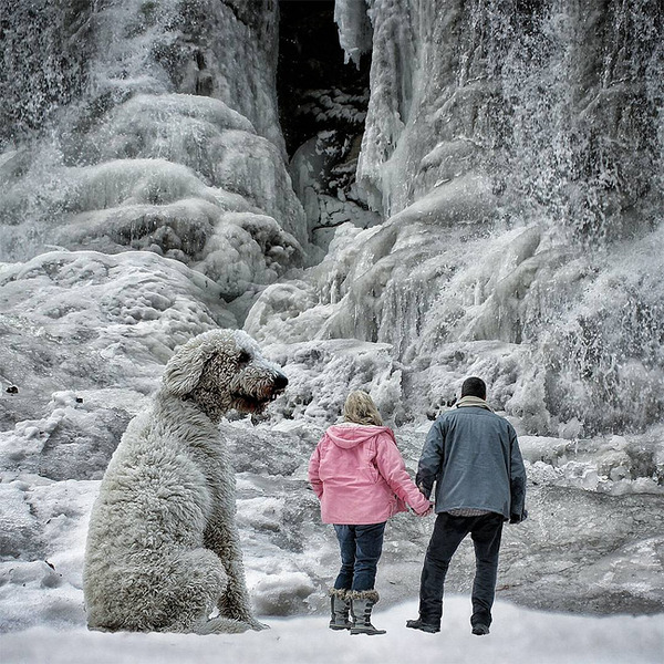 犬を大きくする!そんな夢をフォトショップの画像加工 (4)