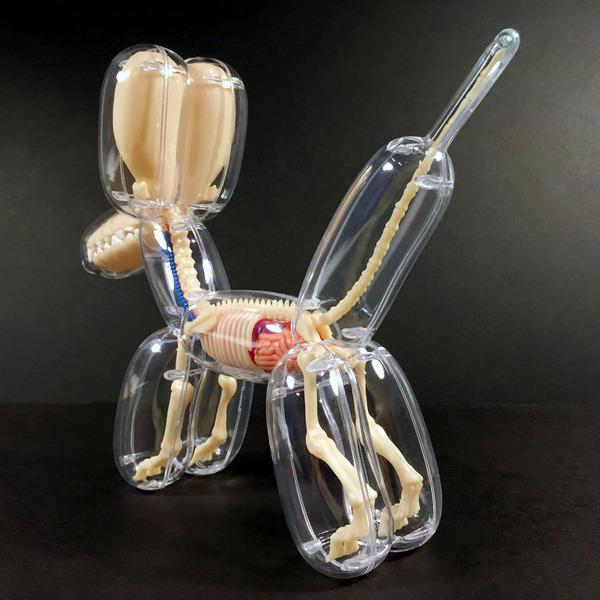 骨や内臓まで丸見え!解剖学のような動物のスケルトンの玩具 (6)