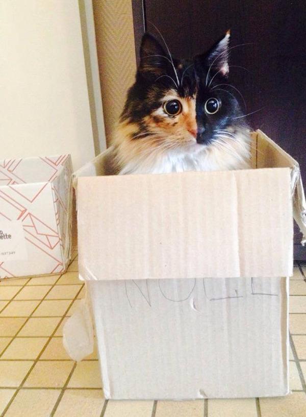 盲目の迷い猫。珍しい毛色のキメラネコが愛を知る (4)