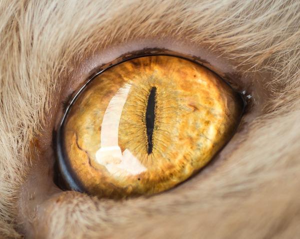 まさにキャッツアイ!綺麗な猫の瞳を撮影した画像16枚 (15)