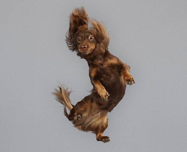 飛ぶ犬!空飛ぶわんこの絶妙な表情が逸品な写真 (3)