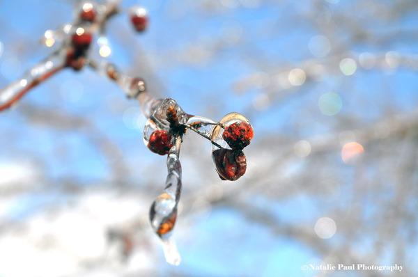 氷霧の後の花8