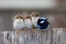 小鳥達が温まるために皆で寄り添っている可愛い画像25枚