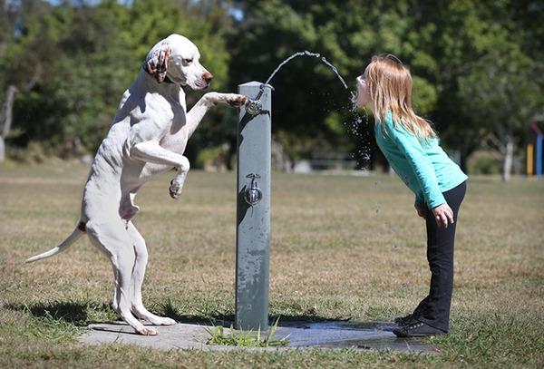 ペットは大切な家族!犬や猫と人間の子供の画像 (69)