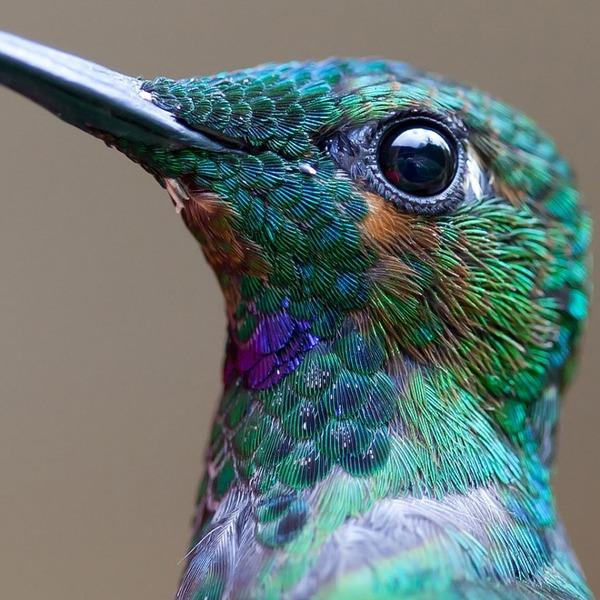 ハチドリ、可愛い、美しい小鳥の写真 (1)