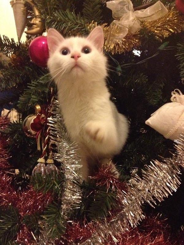 猫、あらぶる!クリスマスツリーに登る猫画像 (35)