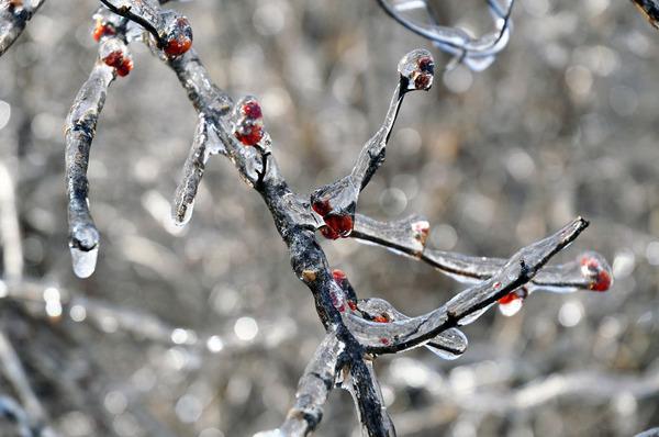氷霧の後の花14