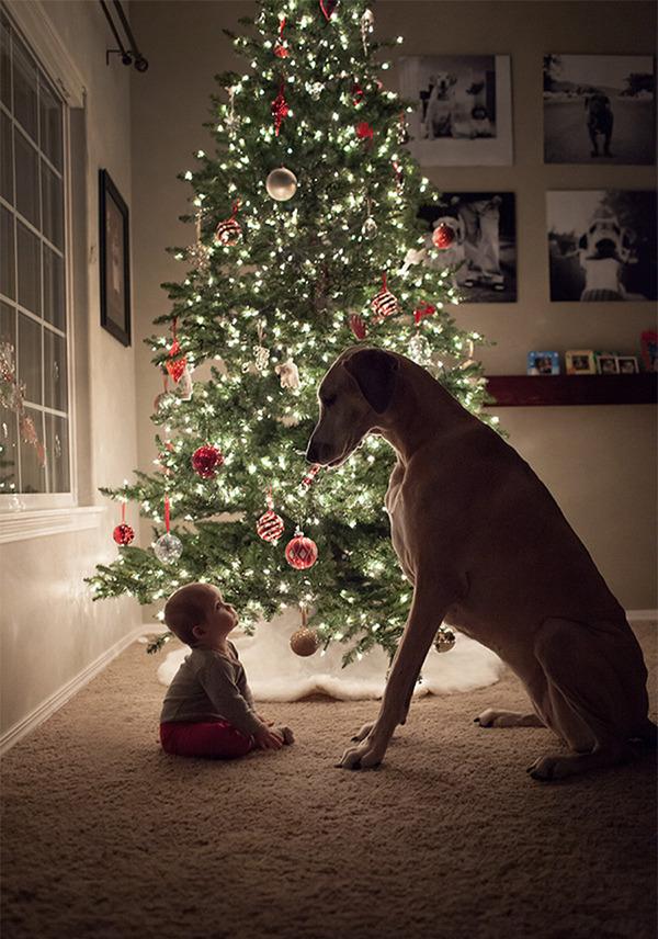 ペットは大切な家族!犬や猫と人間の子供の画像 (19)