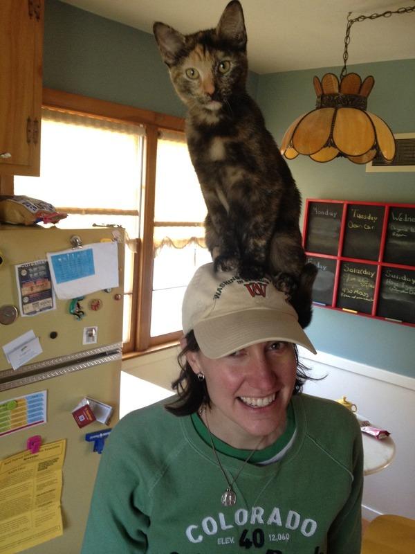 猫帽子 1