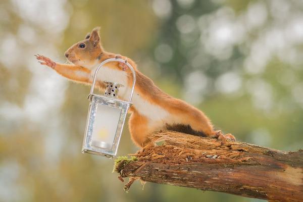 リスってファンタジー!家の裏庭に遊びに来る野生のリスの写真 (7)