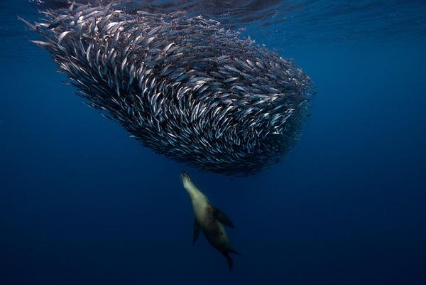 ワニの水中写真 Jorge Cervera Hauser 3