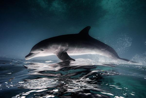イルカの海中写真 Jorge Cervera Hause 1r