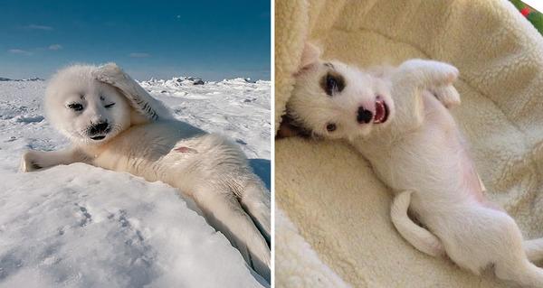 アザラシって犬そっくりじゃね?犬とアザラシを比較画像! (27)