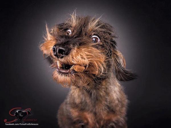 ハングリー精神!犬が獲物を食らう瞬間の静止画像がヤバイ (16)