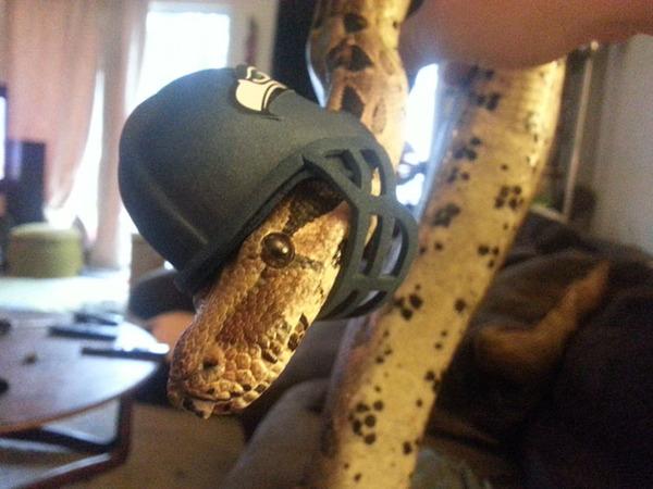 なんだこれカワイイぞ!帽子を被ったヘビ画像特集 (24)