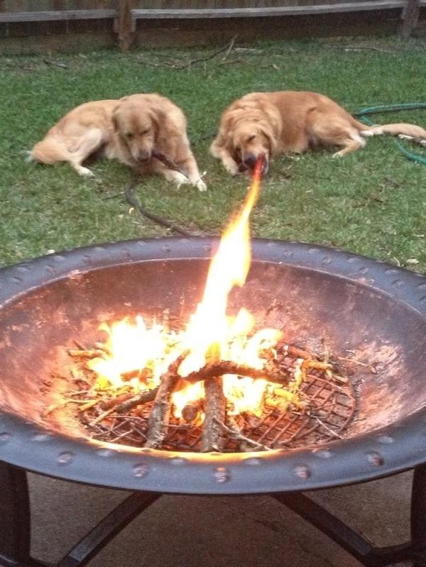 火を吐く犬