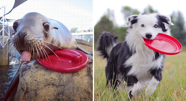 アザラシって犬そっくりじゃね?犬とアザラシを比較画像! (5)