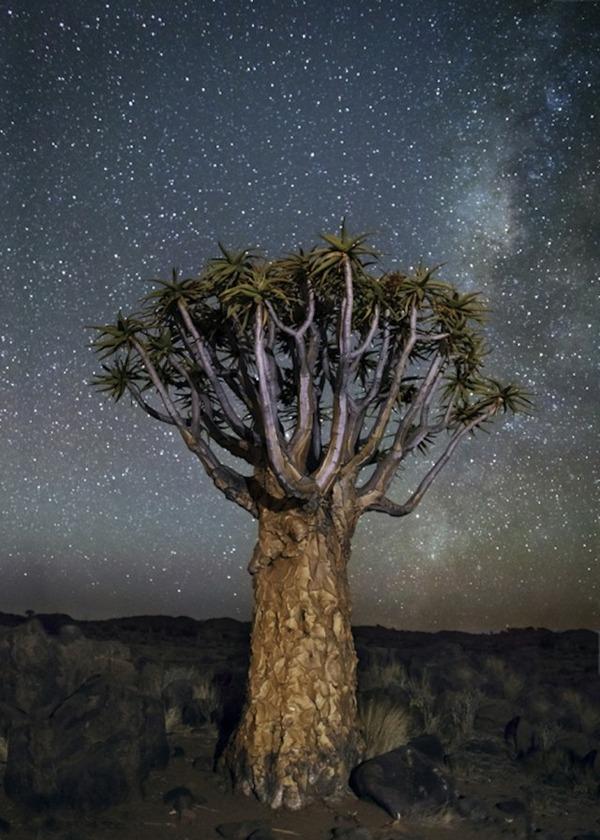 星空と古い木の美しい風景写真 12