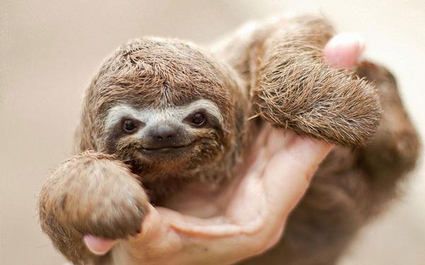 ニッコリ。幸せそうな笑顔が素敵な動物画像特集! (2)