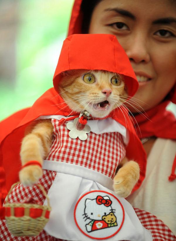 コスプレ猫!ハロウィンだし仮装した猫画像 (21)