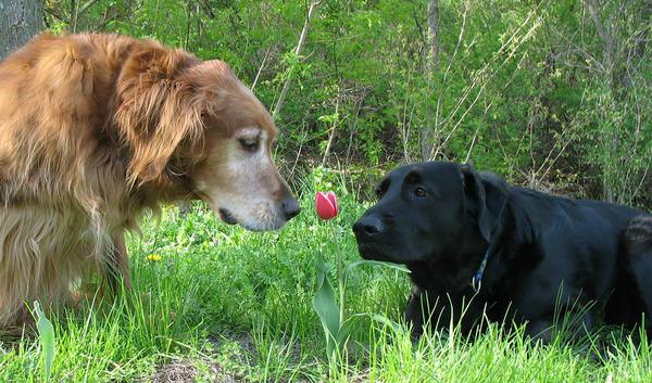 くんくん良い香り。花の匂いを嗅ぐ動物たちの画像 (45)