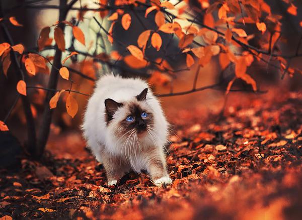 紅葉や秋の森の中を楽しむ動物たちの画像 (11)
