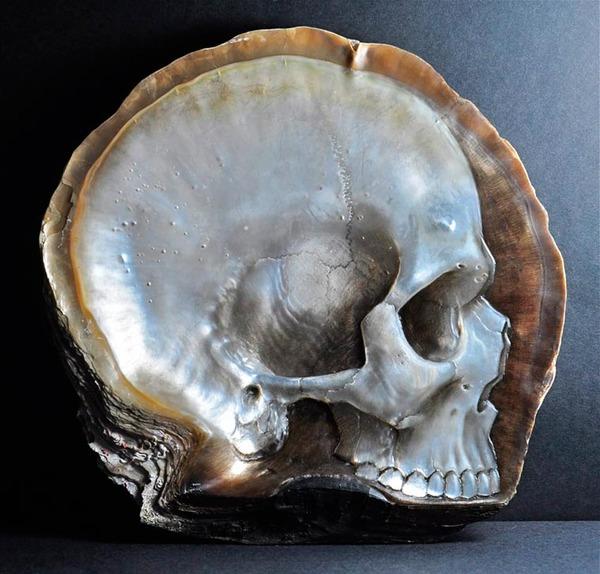 美しい質感。貝殻に髑髏(ドクロ)を彫った彫刻作品 (1)