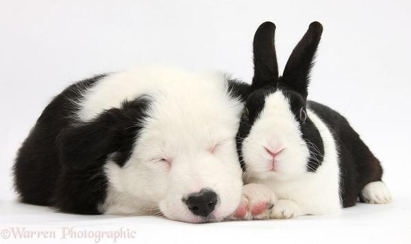 似てる!親が違うのにそっくりな動物画像30枚 (23)