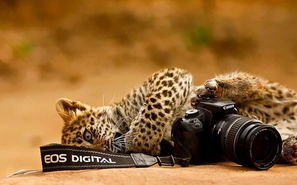 カメラに興味津々な動物の画像 (16)