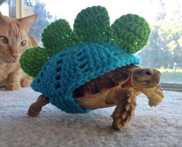 寒いからニットのセーターを小動物に着せてみた画像 (1)