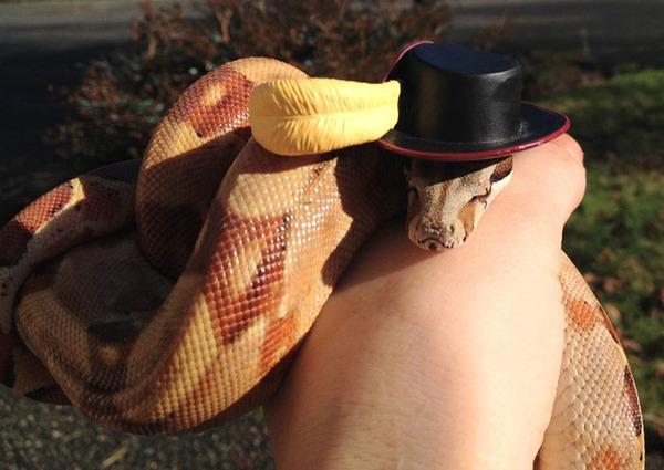 なんだこれカワイイぞ!帽子を被ったヘビ画像特集 (12)