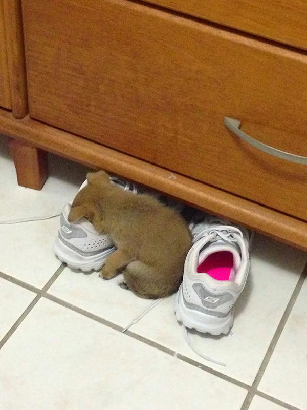 どこででも居眠りしちゃう子犬の可愛い画像 4