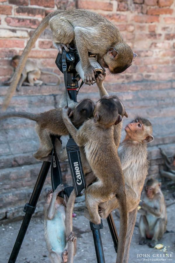 カメラに興味津々な動物の画像 (27)