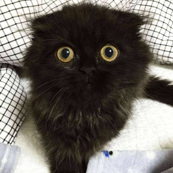 「まっくろくろすけ」みたいな黒猫画像!黒いモフモフ (13)