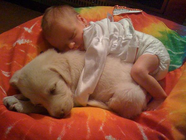ペットは大切な家族!犬や猫と人間の子供の画像 (46)
