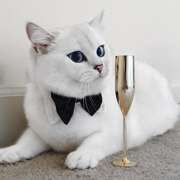 美しい…。綺麗な青い瞳をした白猫が話題!【猫画像】 (10)