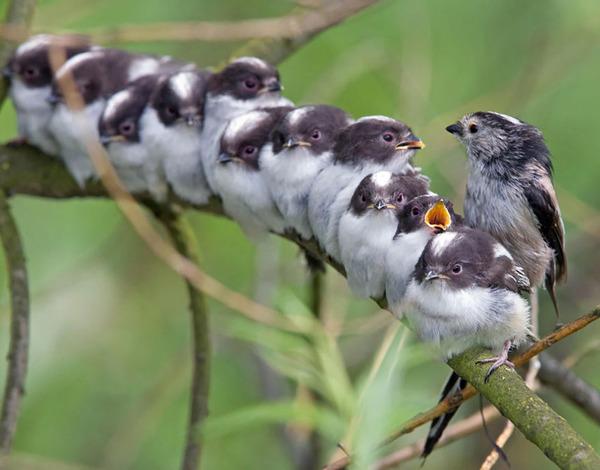 小鳥が温まる為に皆で寄り添っている可愛い画像 (19)